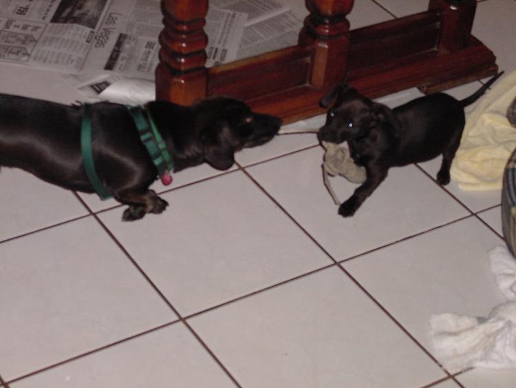 Bixby and Lucky
